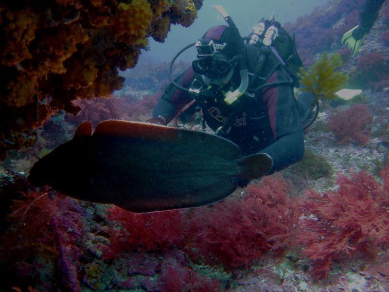 contacto con la naturaleza a través del buceo en Tarifa