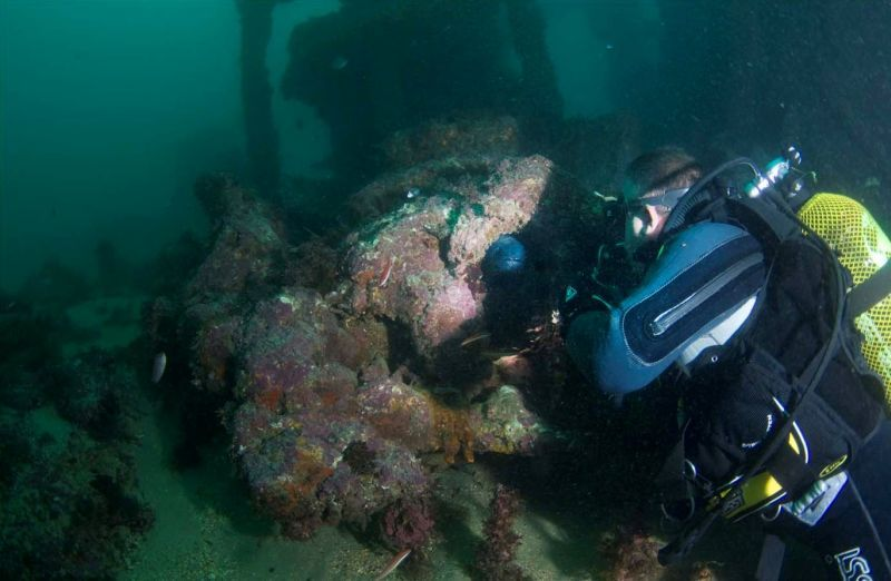 submarinismo avistamiento congrio