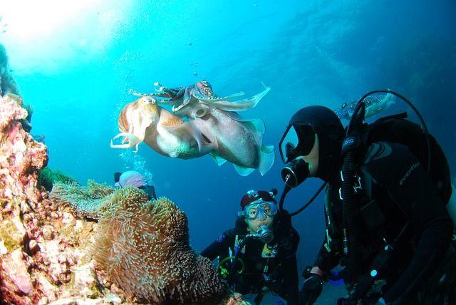 animales marinos pretorianos
