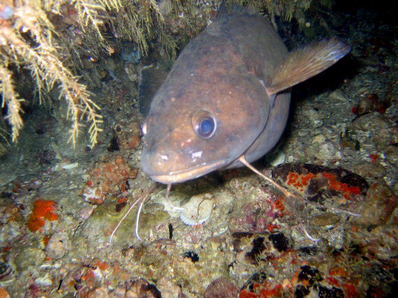forkbeard submarinismo sevilla