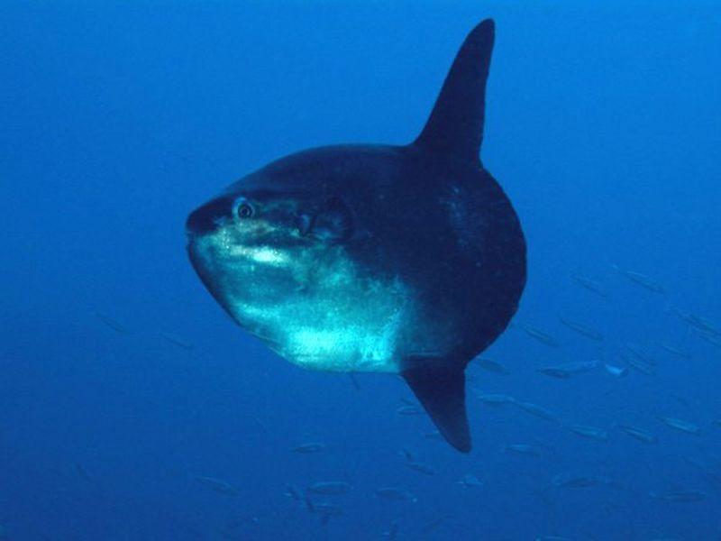 Moonfish at Tarifa